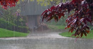 HEALTH HINTS FOR RAINY SEASON